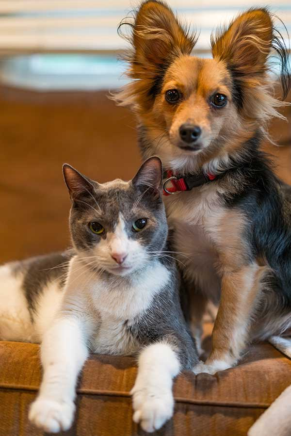 Oak Harbor Pet Haven_Pet Supplies for Dogs and Cats
