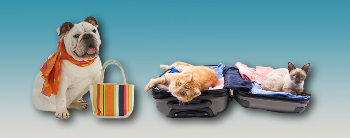 Dog and cat leaving home_in suitcase