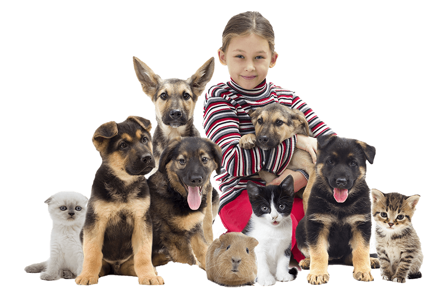 Young Girl with many animals for boarding