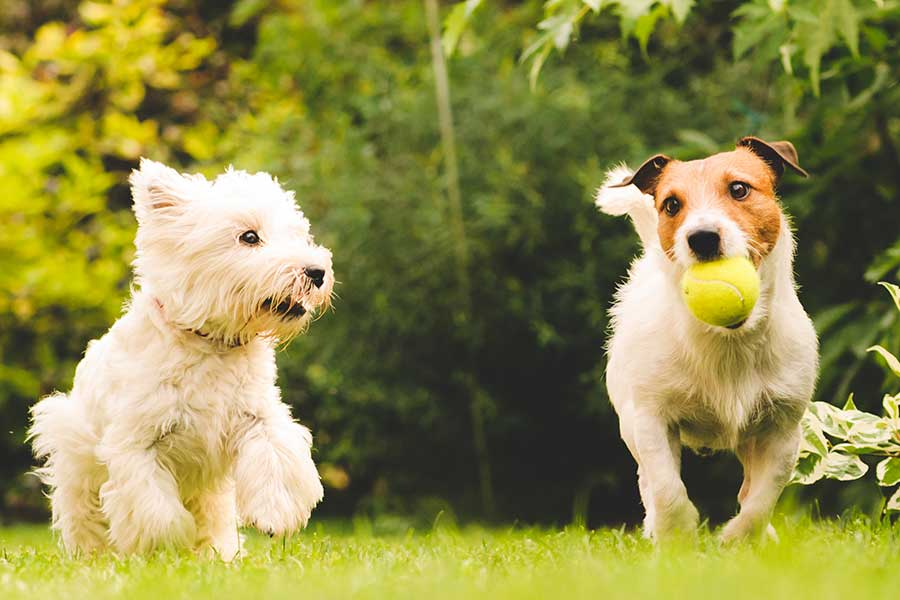 Doggie Daycare_Two dogs playing