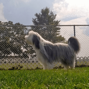 Dog in fenced in play area, safe play at OHPH