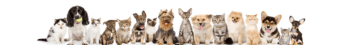 OHPH_small slider of dogs and cats