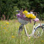 bicycle 2553927 1920 150x150 - É tempo de pedalar