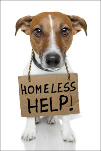 Dog with homeless sign border