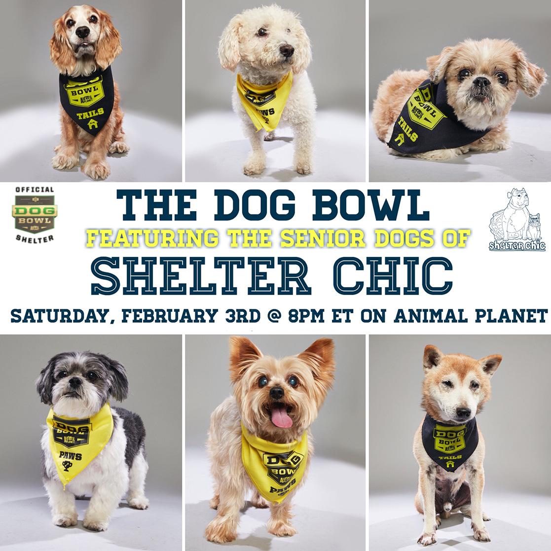 The Dog Bowl