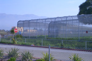Salinas Greenhouse Fencing
