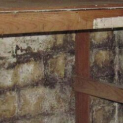 Basement & Crawl Space Mold Remediation Company | SouthernDry of Alabama