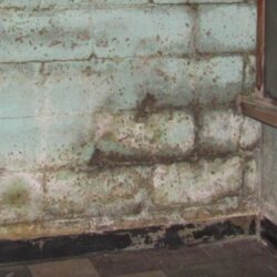 Basement & Crawl Space Mold Cleanup Services | SouthernDry of Alabama