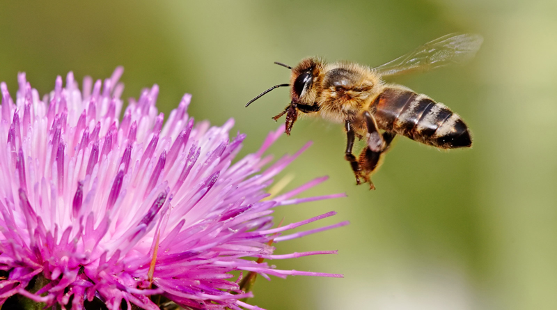 """Sad Because You Don't Fit In? Don't """"Bee"""""""