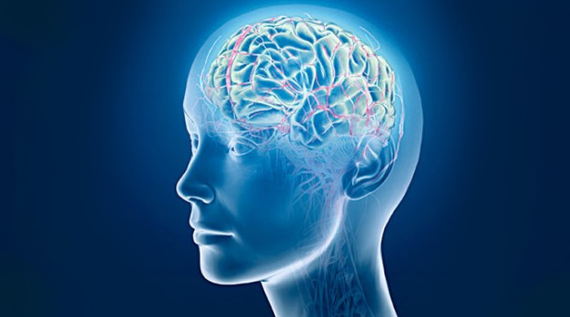 Neuropsychology The Map Of The Head And The Benefits Of Massage