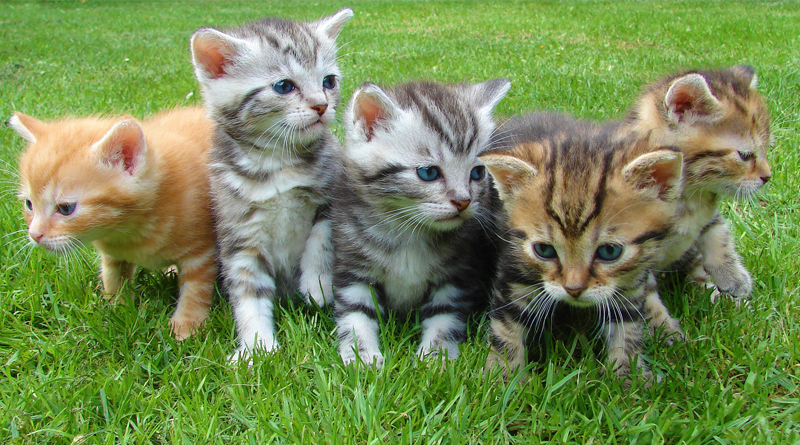 Research In UK Suggests Mental Illness Not Linked To Cat Ownership