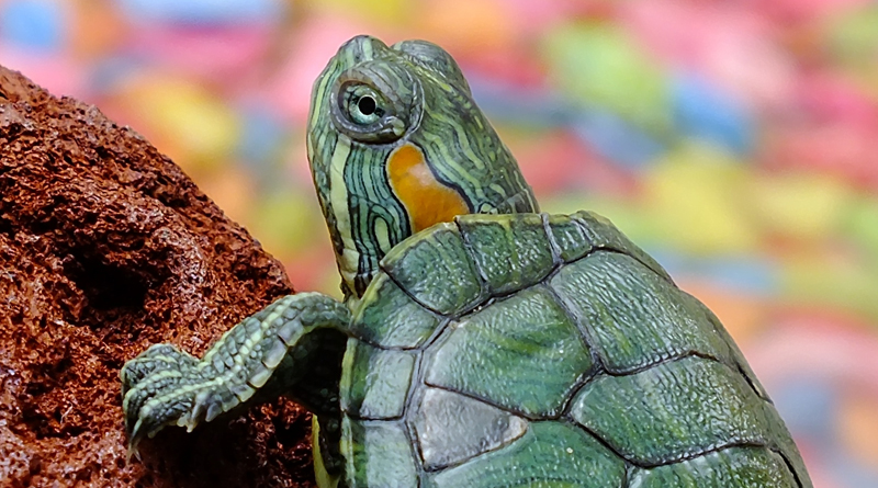 How Rescuing Turtles Helped A Man With Tourette Syndrome