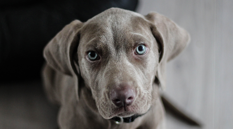 Is-your-dog-more-emotionally-intelligent-than-you?