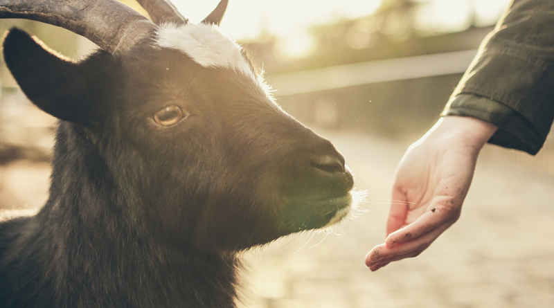Narcissists And Scapegoats