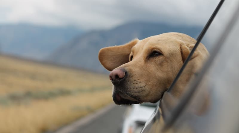 Our Autism Journey With A Canine Companion