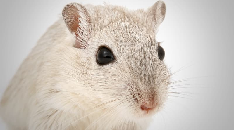 Cover Image - New Treatment Clears Alzheimer's Plaque In Mice