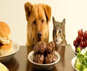 dog_and_cat_staring_at_food_large