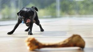 dog_with_bone_large