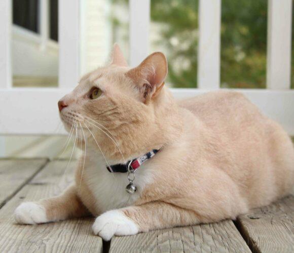 Pawtitas Cat collar multicolor