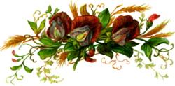 sweet-pea-blooms-1