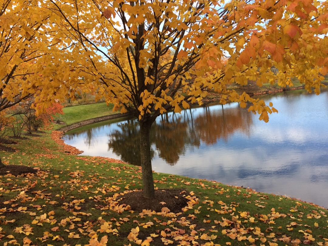 Seeing God's Artistry in the Fall Colors