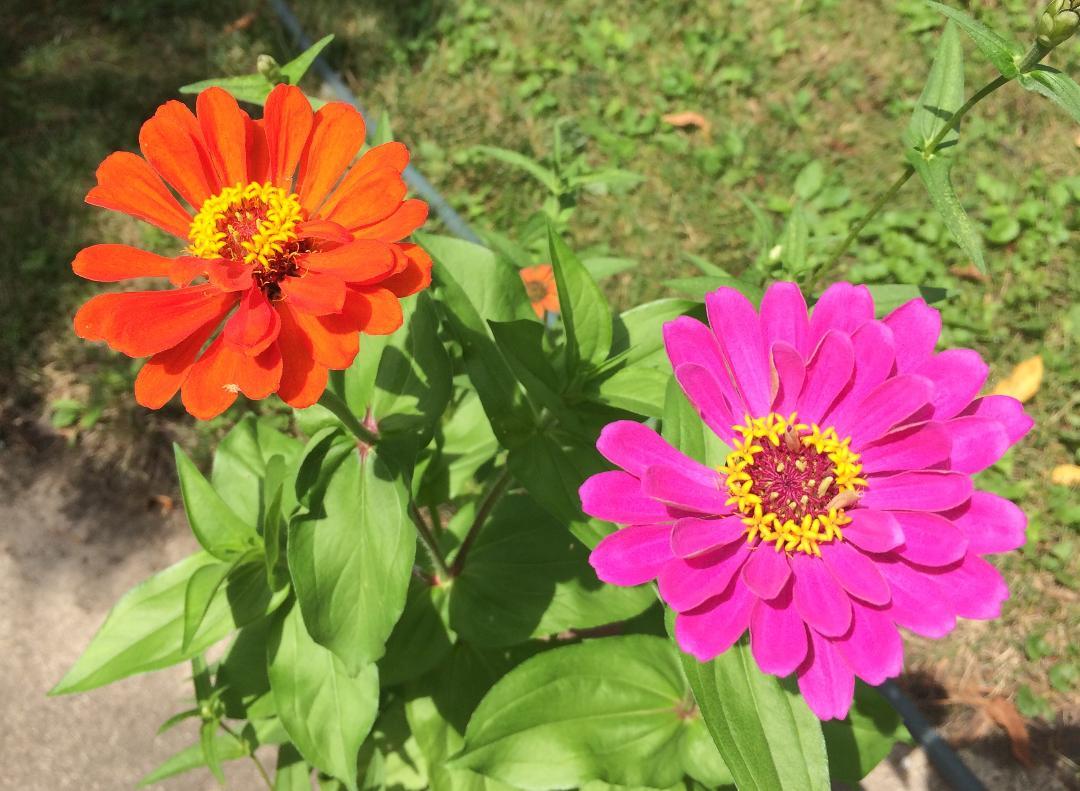 Joy in the Garden