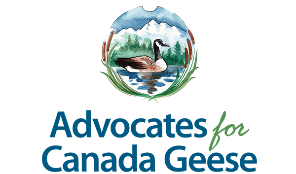 Advocates For Canada Geese