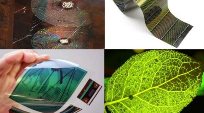 Spider webs and leaves serve as models for bendable electronics (Boston College)