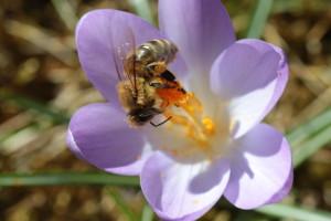 Winter Bee (Steven Spence)