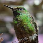 Hummingbird by Steven Spence