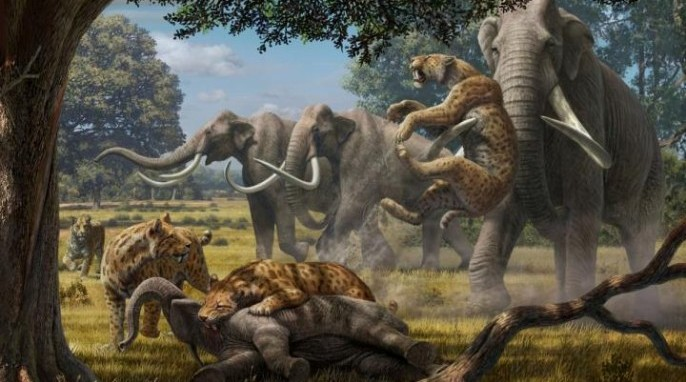 Artist's impression of sabertooth cats hunting mammoths (Mauricio Anton).