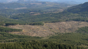 Soil Carbon Unstable after Clear Cutting