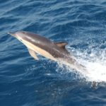 Studying the Dolphin Genome for Human Health