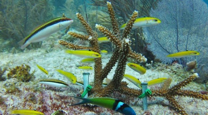 Underwater Gardening: Coral Reefs and Aquaculture