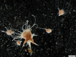Do Humans Influence Jellyfish Populations along Coasts?