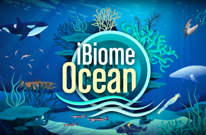 Students Explore Oceans, Wetlands with Interactive Games