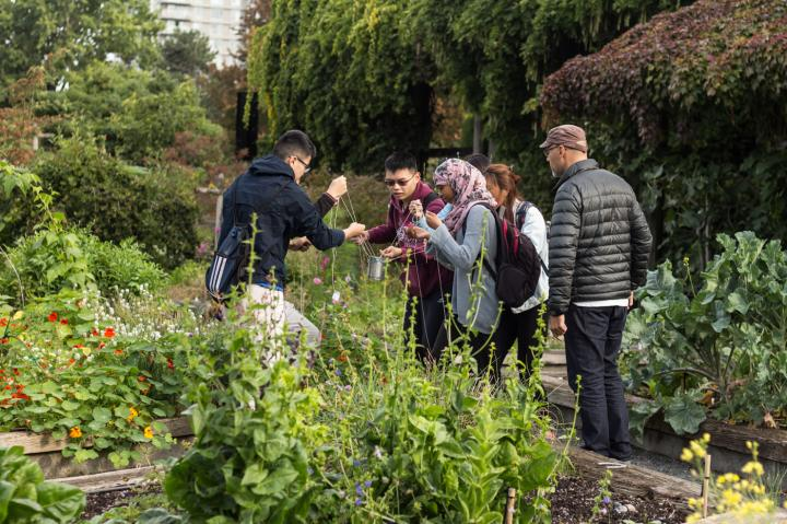 """The image depicts various people walking through a garden while a docent points out various plants, combating """"plant blindness."""" Youth learn about water conservation and sustainable food choices in the food garden at University of British Columbia Botanical Garden. Image by Krishnan et al."""