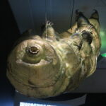 "The water bear or moss piglet is a tiny invertebrate that's been around on Earth for more than half a billion years. This is a giant model at the AMNH's ""Life at the Limits"" exhibit. Photo courtesy of Eden, Janine, and Jim(CC BY 2.0)"