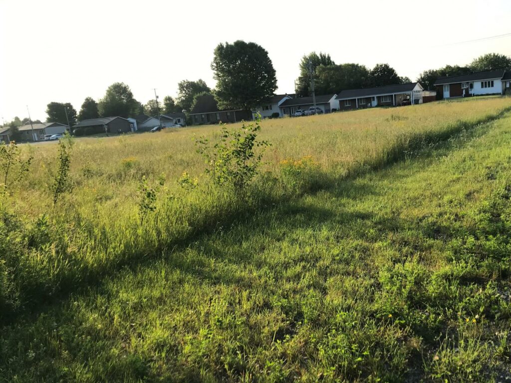 An experimental site comparing the ecological effects of intense mowing (R) with low impact mowing (L) in Trois-Rivieres, Canada.