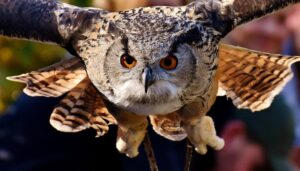SuperbOwl: Image credit: Alexas_Fotos via Pixabay