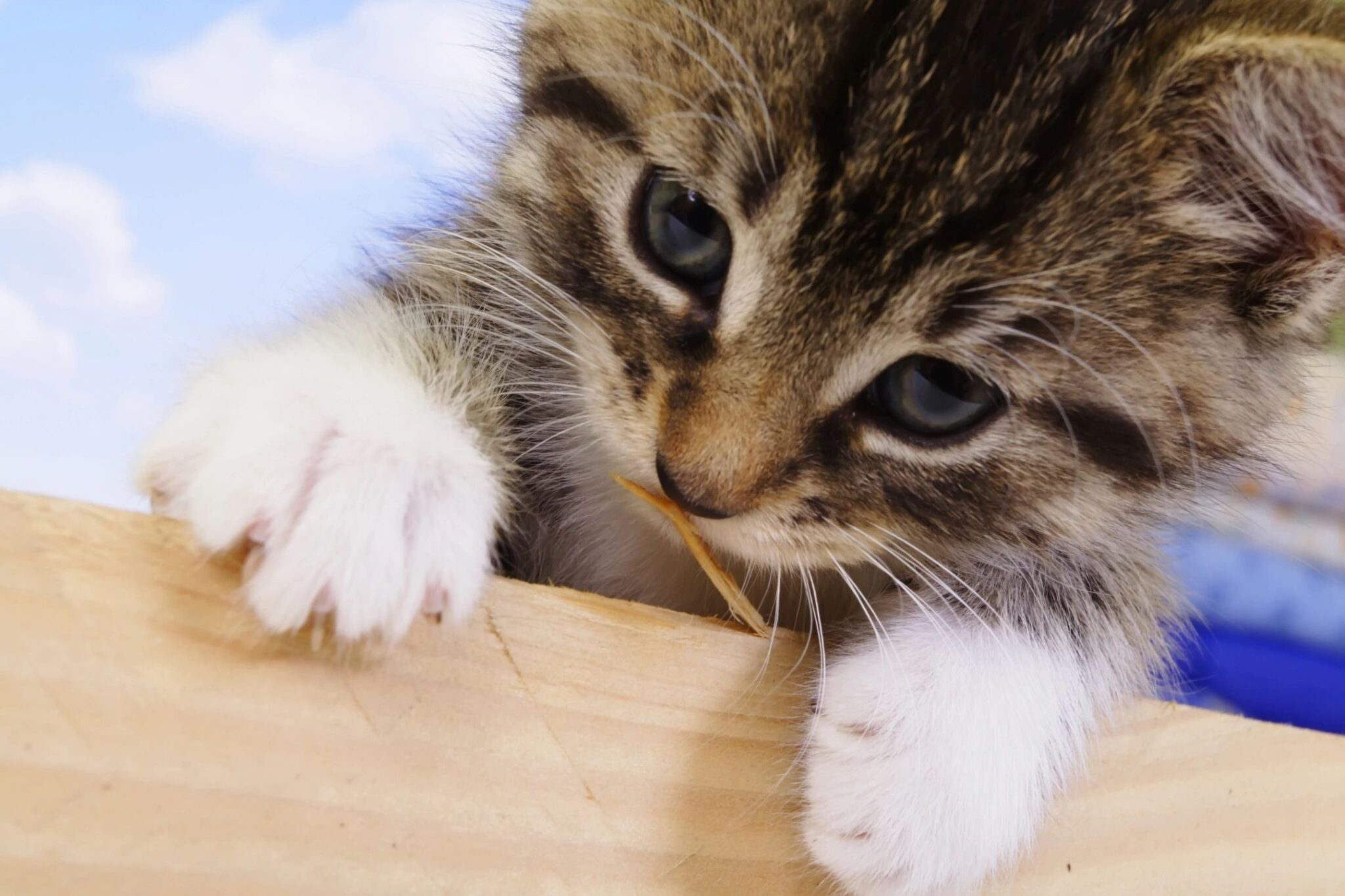 cat-specific music reduces stress in cats
