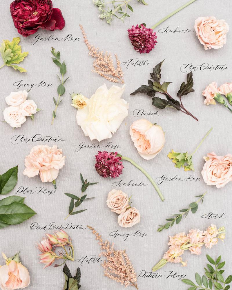 maroon scabiosa and garden rose wedding bouquet