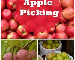 Apple Picking Fall Activity for Kids