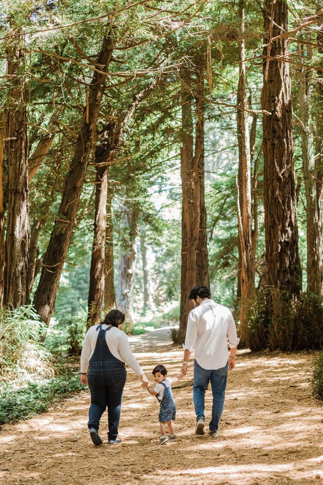 redwoods in San Francisco