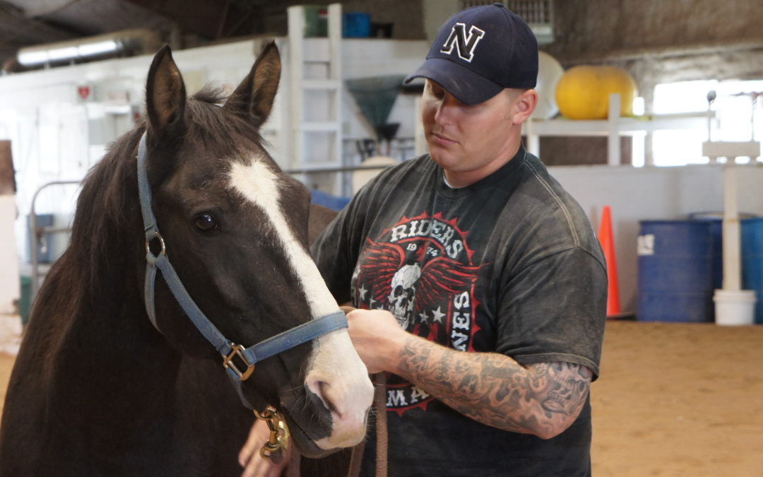 Equine Assisted Mental Health, an Introduction to the Diamond Model