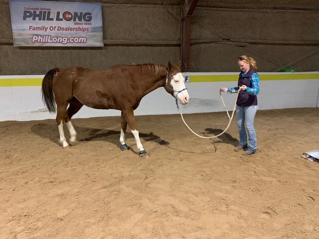 Equine Director Maggie schools therapy horse Shorty