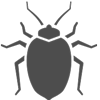 bed bug image