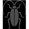image of coackroach