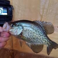 George Wells Fishing Trips Walleye Fishing
