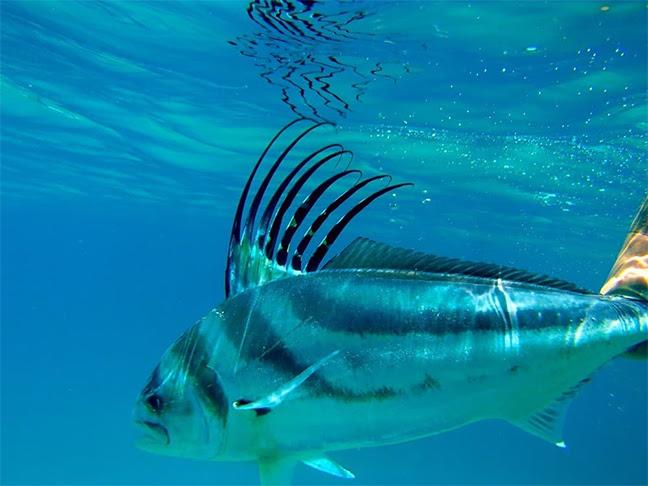 Seaguar Gray FishTag
